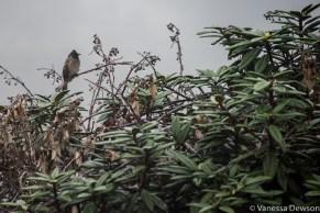 Bird, Horton Plains, Sri Lanka