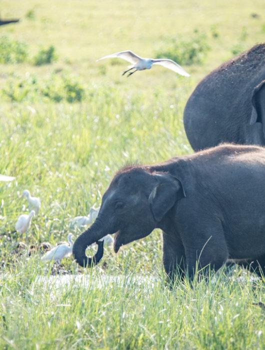 Sri Lanka Photo Tour Blog – Day 5