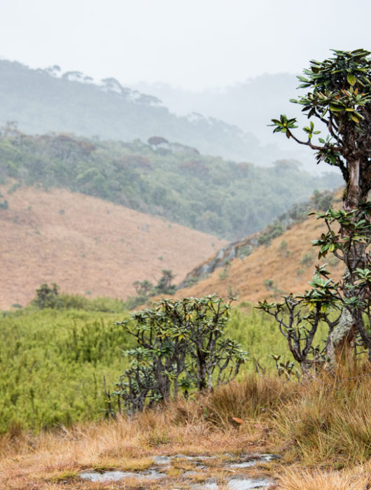 Sri Lanka Photo Tour Blog – Day 8