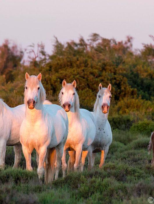 France: Horses & Wine Photo Tour – Day 2