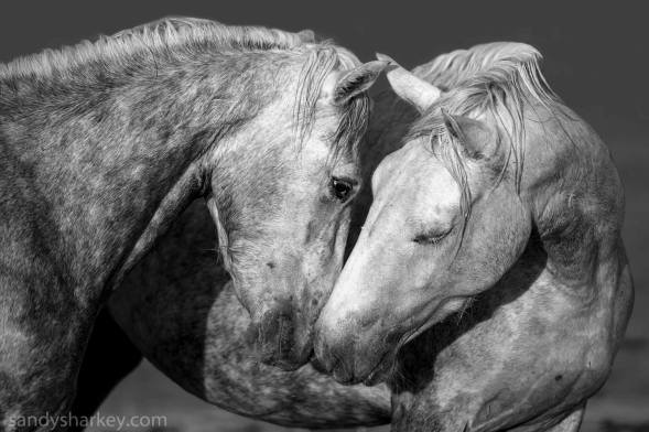 Friends or foes? Photo by: Sandy Sharkey