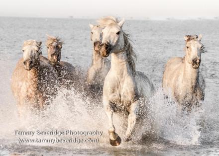 Running free. Photo by: Tammy Beveridge