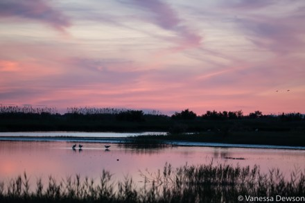 Sunset over the marshes in the Camargue. Photo by: Vanessa Dewson