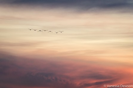 Flying into the sunset. Photo by: Vanessa Dewson