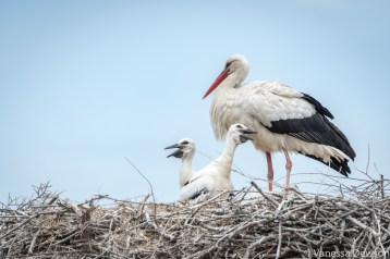 Storks. Photo by: Vanessa Dewson