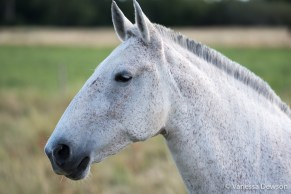 Horse with a crew cut