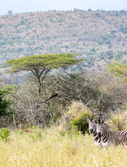 South Africa Photo Tour – Days 8 & 9