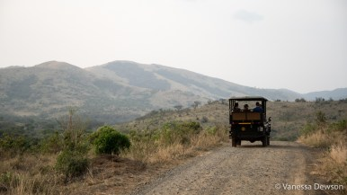 Game drive in Hluhluwe-iMfolozi Park