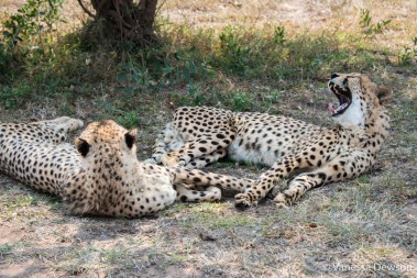 Emdoneni Cheetahs