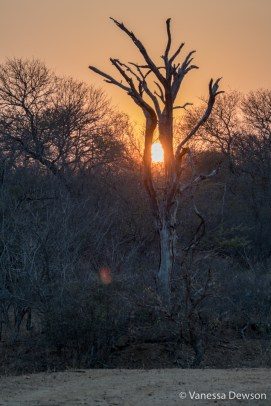 Our last sunset in the bush