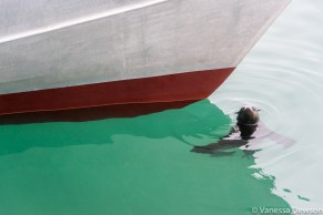 Seal in the harbour