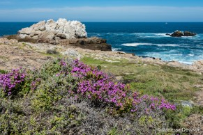 Spring in Hermanus