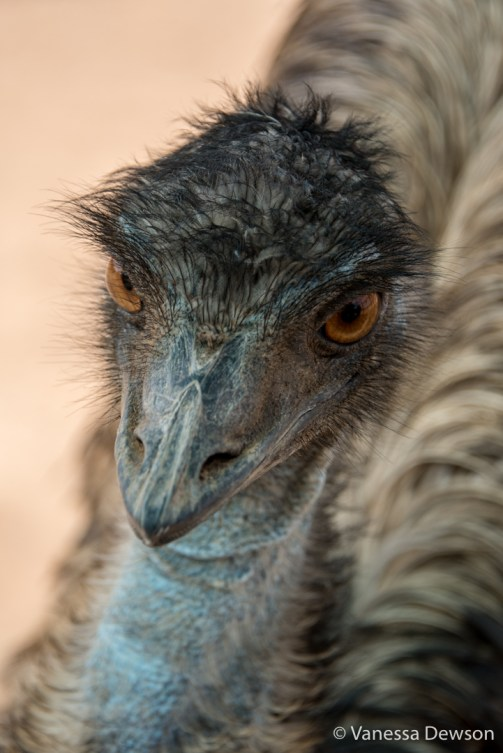 Frankie the Emu