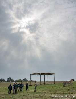 Knysna Elephant Park