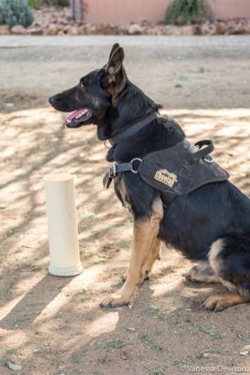 Scat detection dog