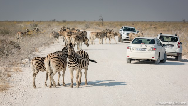 Zebra gridlock