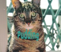 pudding5