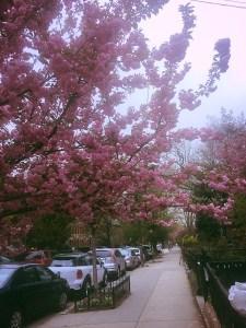 Carroll Gardens spring