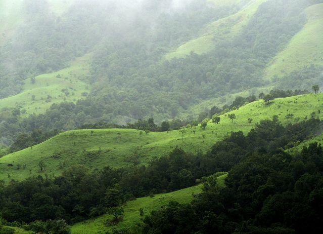 1280px-Shola_Grasslands_and_forests_in_the_Kudremukh_National_Park,_Western_Ghats,_Karnataka