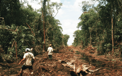 Social Forestry and Agrarian Reforms in Indonesia