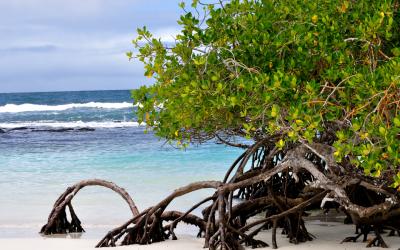 International Mangrove Day – Stop the deforestation of shorelines!