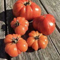Bali Tomato