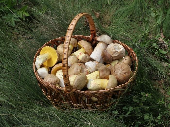 mushrooms for iodine