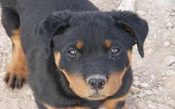 parvo treatment in dogs