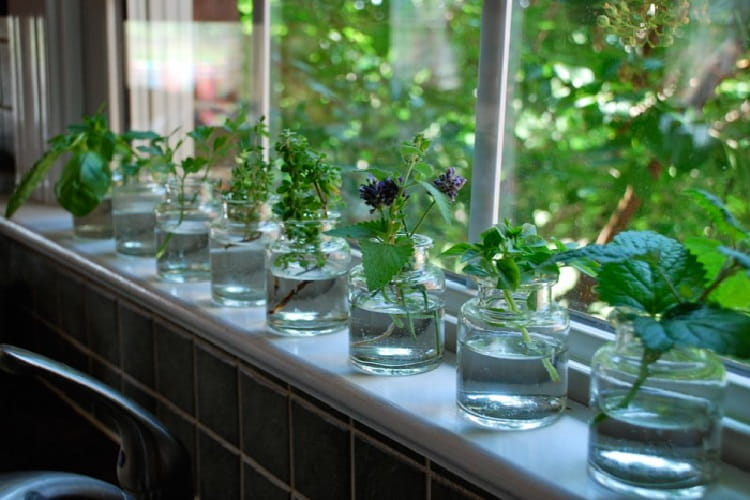euphoric high herbs