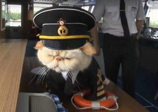 russian-sailor-cat-700x496