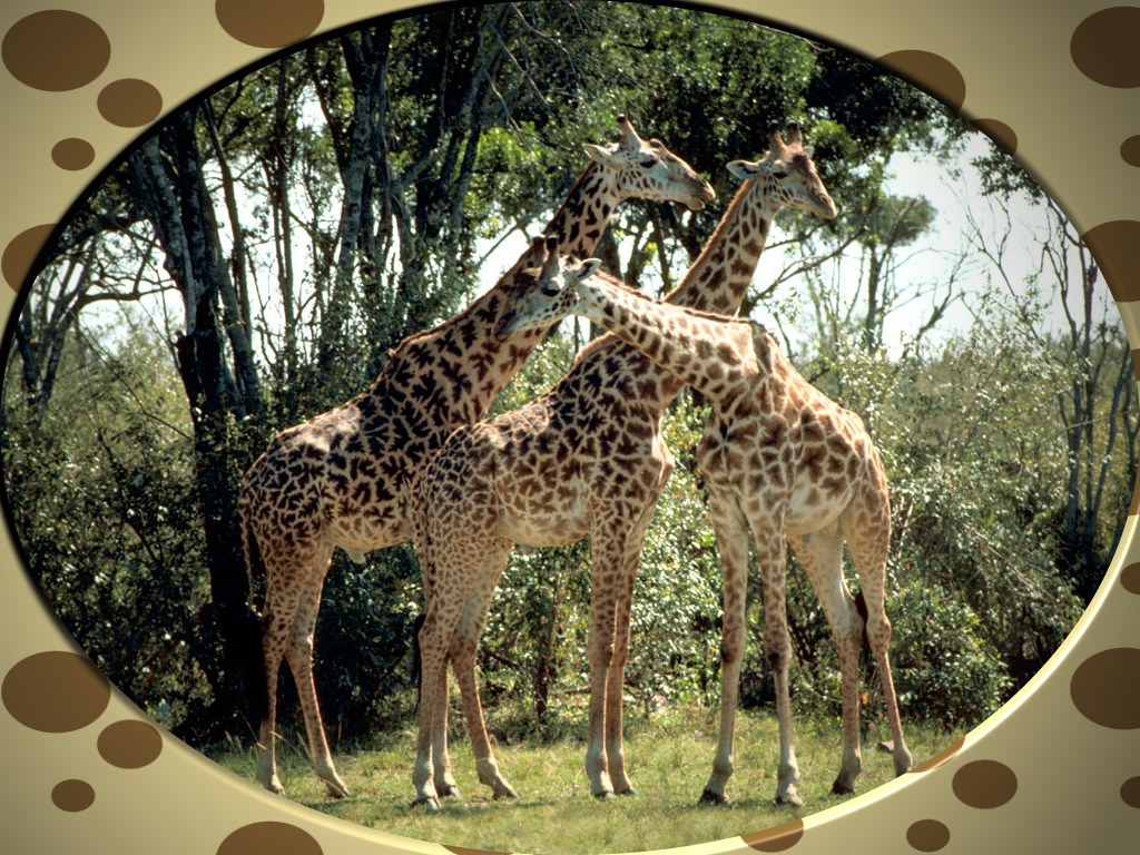 Giraffe Pictures And Facts