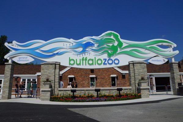 Buffalo-Zoo-01