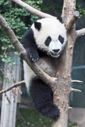 Panda-Center-8984