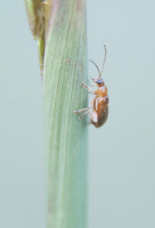 bug-ofw