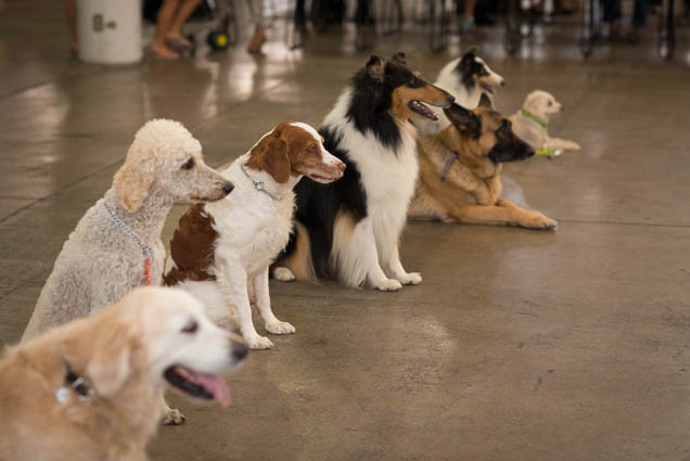 hawaii-pet-expo-2019-honolulu-blaisdell-fokopoint-3021 Hawaii Pet Expo 2019