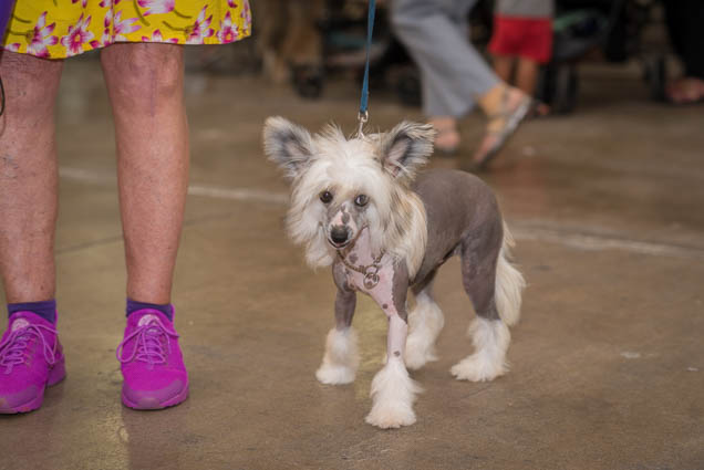 hawaii-pet-expo-2019-honolulu-blaisdell-fokopoint-3040 Hawaii Pet Expo 2019