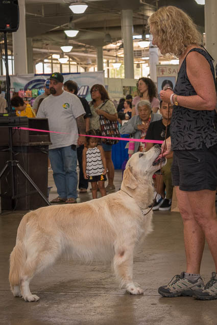 hawaii-pet-expo-2019-honolulu-blaisdell-fokopoint-3068 Hawaii Pet Expo 2019