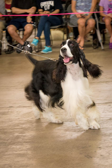 hawaii-pet-expo-2019-honolulu-blaisdell-fokopoint-3074 Hawaii Pet Expo 2019