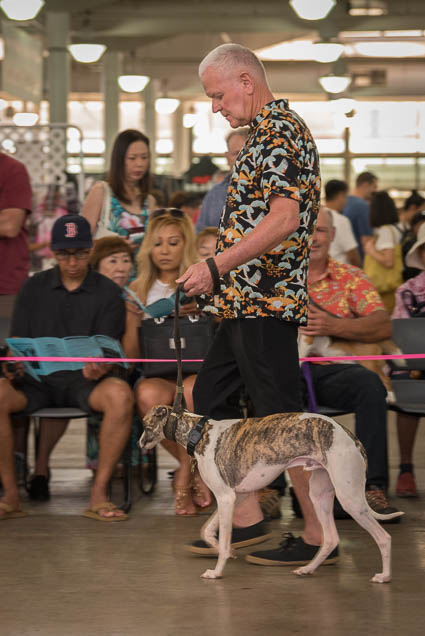 hawaii-pet-expo-2019-honolulu-blaisdell-fokopoint-3121 Hawaii Pet Expo 2019