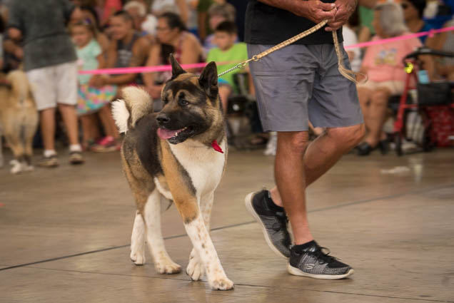 hawaii-pet-expo-2019-honolulu-blaisdell-fokopoint-3130 Hawaii Pet Expo 2019