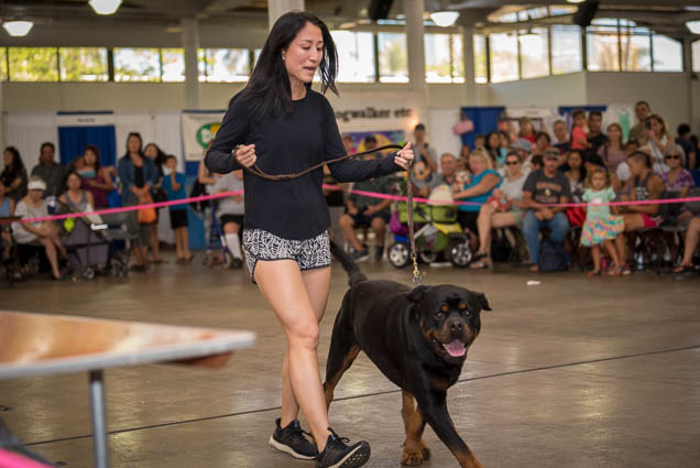 hawaii-pet-expo-2019-honolulu-blaisdell-fokopoint-3174 Hawaii Pet Expo 2019