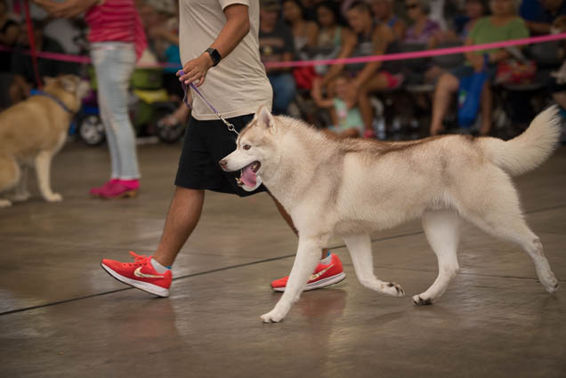 hawaii-pet-expo-2019-honolulu-blaisdell-fokopoint-3186 Hawaii Pet Expo 2019