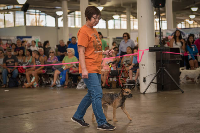 hawaii-pet-expo-2019-honolulu-blaisdell-fokopoint-3199 Hawaii Pet Expo 2019