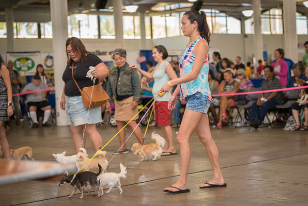 hawaii-pet-expo-2019-honolulu-blaisdell-fokopoint-3233 Hawaii Pet Expo 2019