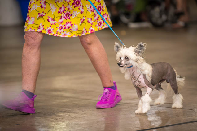 hawaii-pet-expo-2019-honolulu-blaisdell-fokopoint-3248 Hawaii Pet Expo 2019