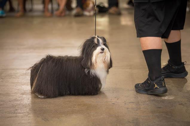 hawaii-pet-expo-2019-honolulu-blaisdell-fokopoint-3254 Hawaii Pet Expo 2019