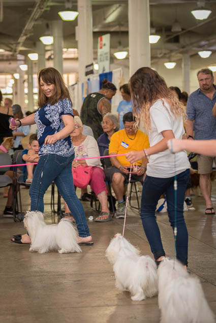 hawaii-pet-expo-2019-honolulu-blaisdell-fokopoint-3258 Hawaii Pet Expo 2019