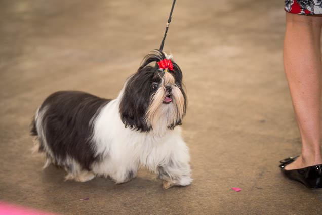 hawaii-pet-expo-2019-honolulu-blaisdell-fokopoint-3304 Hawaii Pet Expo 2019