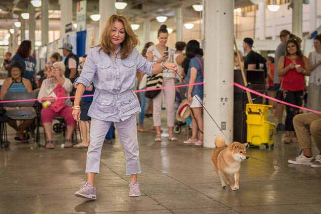 hawaii-pet-expo-2019-honolulu-blaisdell-fokopoint-3374 Hawaii Pet Expo 2019
