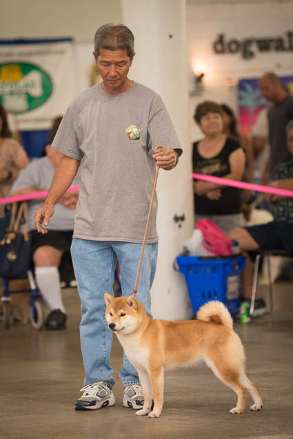 hawaii-pet-expo-2019-honolulu-blaisdell-fokopoint-3378 Hawaii Pet Expo 2019